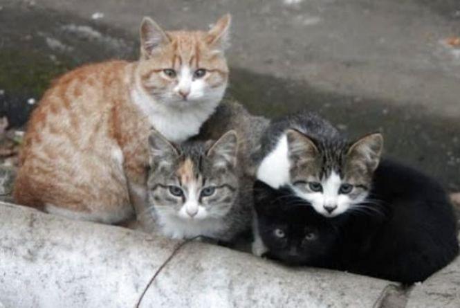 """""""Визнати кішок повноправними хмельничанами"""": у мерії розглянуть петицію про захист вуличних мурчиків"""