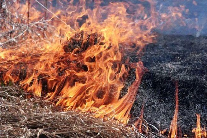 Не найкращий час для пікніка: в Україні оголосили надзвичайну пожежну небезпеку