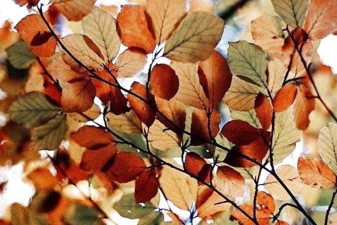 """У понеділок, 8 жовтня, у Хмельницькому буде справжнє """"бабине літо"""""""