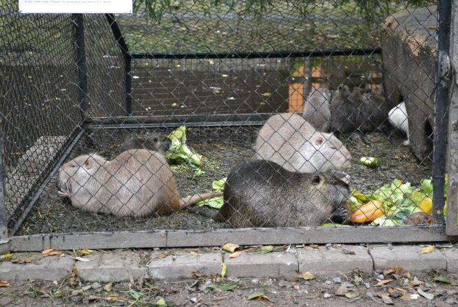 Як зоокуточок у парку Чекмана готують до зими