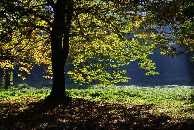 Яскраві кольори осені у парках Хмельницького (ФОТОРЕПОРТАЖ)