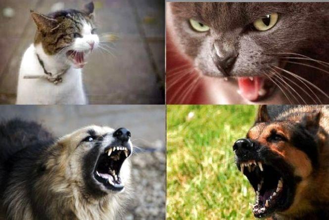 Покусали коти та собаки: на Чемеровеччині 8 людей стали жертвами сказу