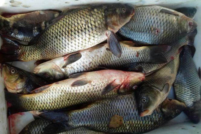 Понад 100 кілограмів риби та раків: на Хмельниччині попалися браконьєри з гарним уловом