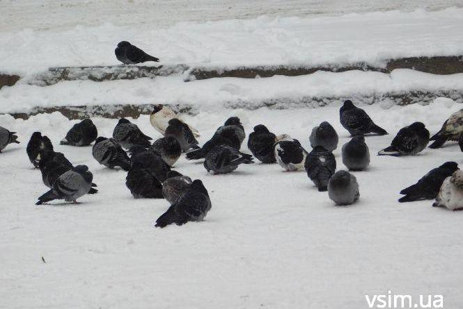 На зміну снігопадам прийдуть сильні морози. Про погоду у Хмельницькому 28 листопада