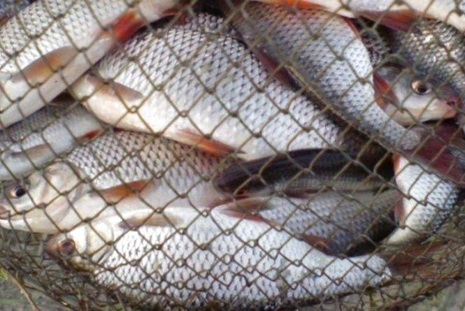 У Новоушицькому районі спіймали браконьєра зі 134 кілограмами риби