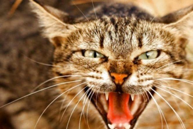 У Хмельницькому в дачному масиві чоловіка вкусив бродячий кіт, хворий на сказ