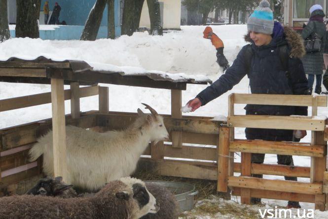 Фото дня: біля ялинки на Проскурівській з'явилися живі овечки та коза
