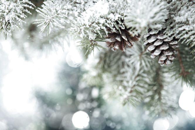 """До -16 градусів та сніг. Синоптик дала """"морозний"""" прогноз українцям на різдвяні вихідні"""