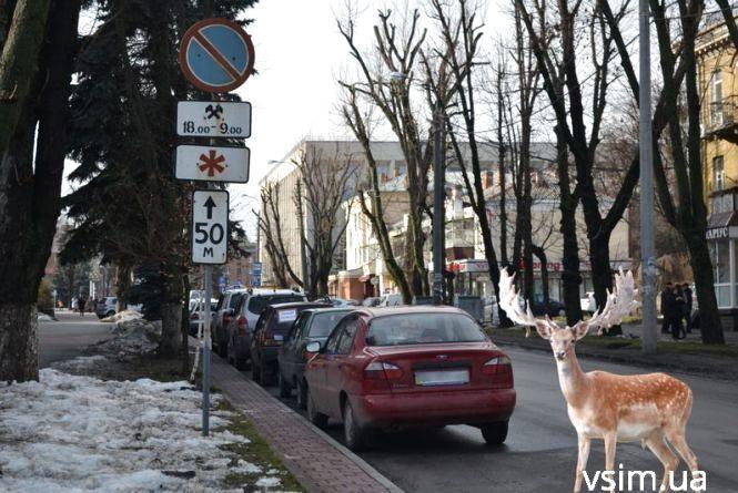 """Обережно, """"лось"""" за кермом! Репортаж із """"парковок"""" Хмельницького"""