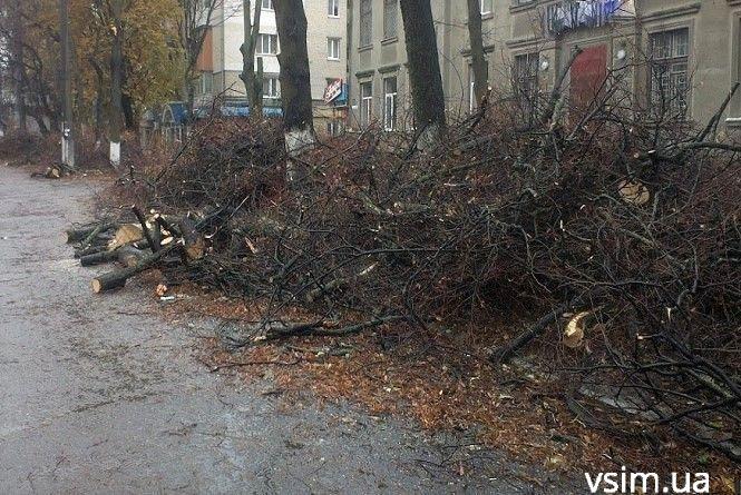 Через омолодження дерев у центрі Хмельницького обмежать рух транспорту