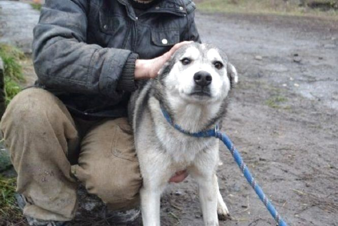 Коли в Хмельницькому з'являться місця для вигулу собак