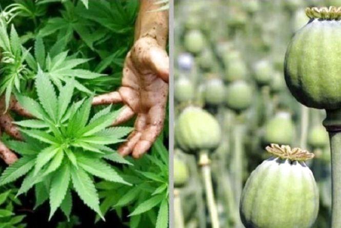 На Хмельниччині 70-річну пенсіонерку засудили за наркотики