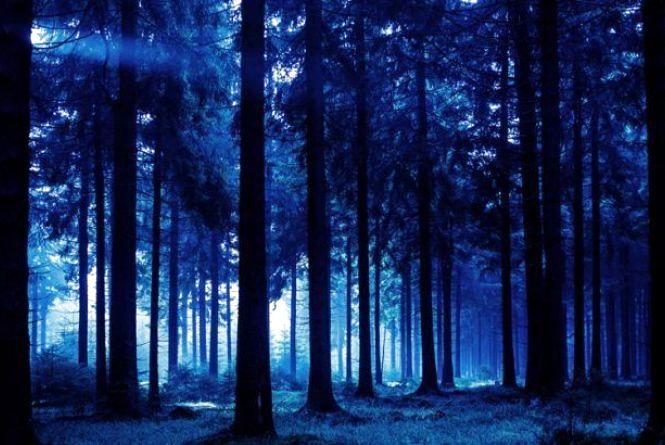 На Хмельниччині поліцейські з собаками посеред ночі шукали туриста у лісі