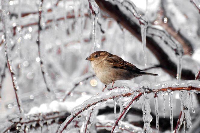 Зима не відступає. Прогноз погоди у Хмельницькому на вихідні