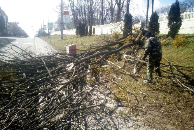 Повалені дерева і зірвані дахи: що наробила негода на Хмельниччині