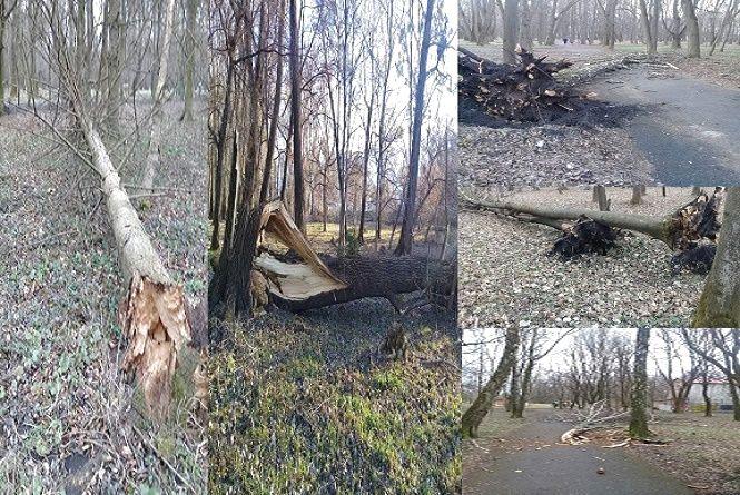Деревопад у парку Чекмана: хмельничан просять утриматись від прогулянок