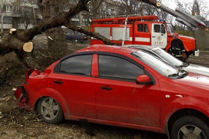 Наслідки буревію: у Хмельницькому дерево розтрощило одразу два автомобілі