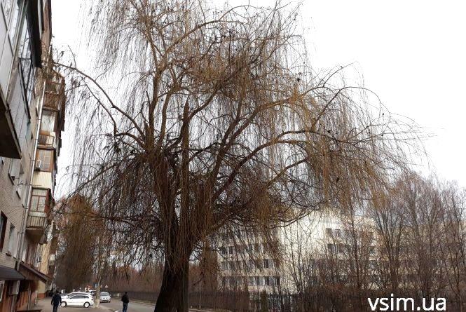 Холод та поривчастий вітер: свіжий прогноз погоди у Хмельницькому на 13 березня