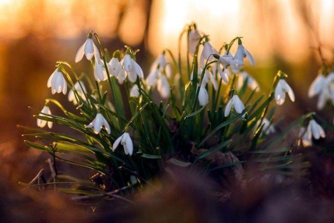 20 березня — День весняного рівнодення: чого не варто робити сьогодні