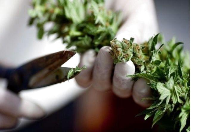 У Верховній Раді підтримали легалізацію марихуани: що про це думають хмельничани? (ОБГОВОРЕННЯ)