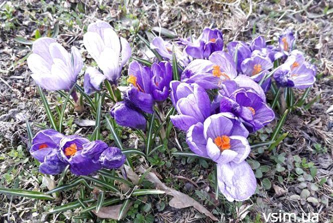 Квітень увірветься в Україну з теплом: прогноз погоди на тиждень