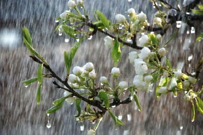 Поливатиме дощем. Про погоду у Хмельницькому 10 квітня