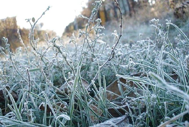 Сильні заморозки йдуть на Хмельниччину. Синоптики оголосили другий рівень небезпеки