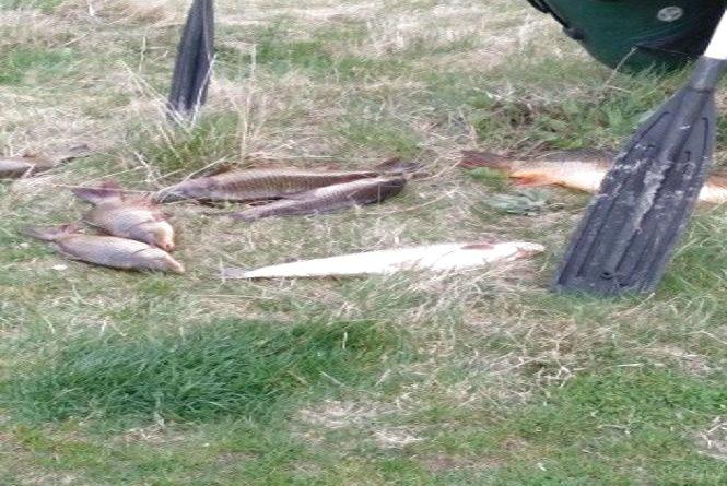 Риби на 17 тисяч гривень виловили браконьєри на Хмельниччині