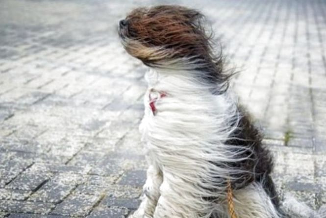 На Хмельниччині оголосили штормове попередження через вітер