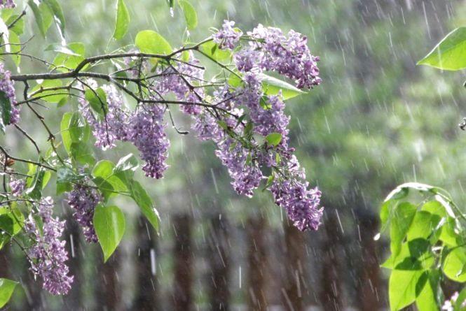 Дощі та кілька хвиль похолодання. Синоптик розповів, яким буде травень в Україні