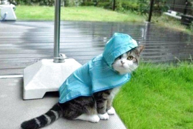 Заморозки, дощ та вітер: хмельничан попередили про негоду