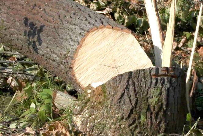 У Хмельницькому дерево впало на газопровід