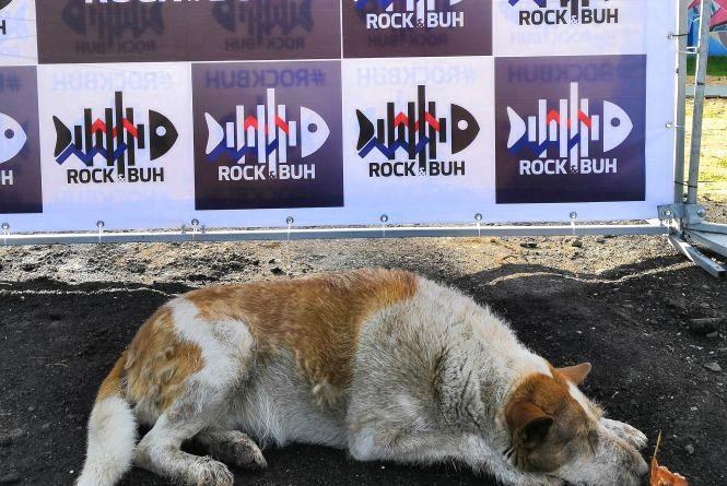 Що писали про хмельницький фестиваль «Rock&Buh» у Facebook