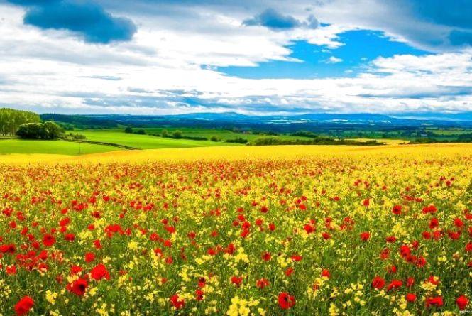 5 червня — День навколишнього середовища