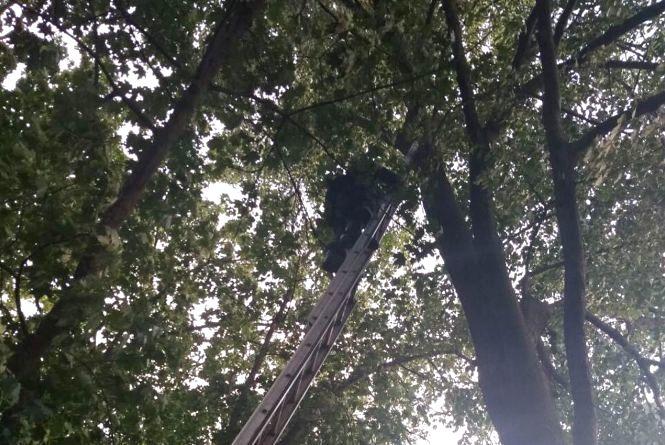 В Городку хлопець поліз рятувати кота і застряг на дереві