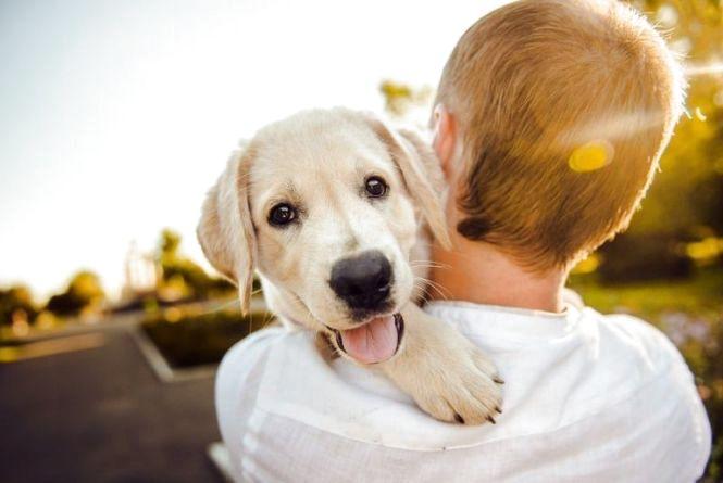 Як добре ви знаєте собак (ТЕСТ)