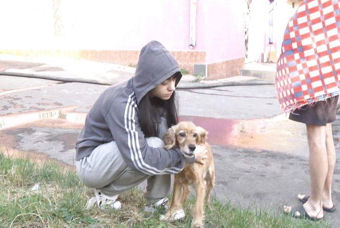 Жителів будинку, який горів на Кам'янецькій, врятувала собака
