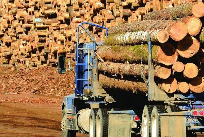 Хмельницькі підприємці за змовою скуповували деревину. Їх оштрафували