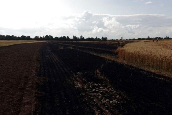 На Хмельниччині вогонь знищив велику площу пшениці