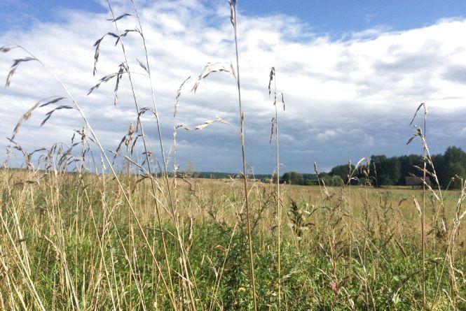 У Хмельницькому потепліє: прогноз погоди на 19 липня