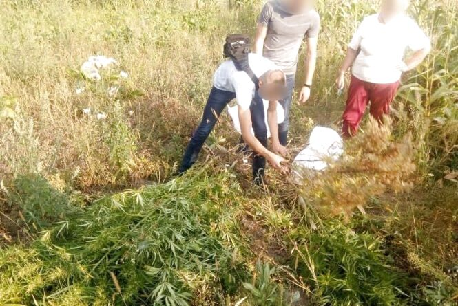 На Хмельниччині у 63-річної жінки знайшли 27 кущів коноплі