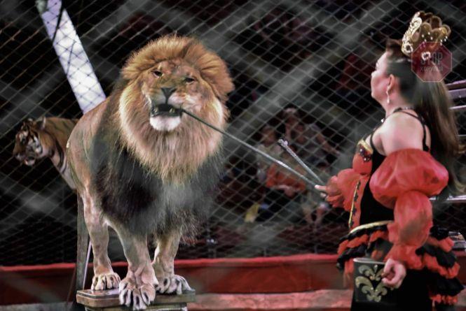 Хмельничанка просить заборонити у місті цирки з тваринами