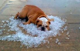 Спека повернеться в кінці липня. Найбільше страждатимуть сердечники та гіпертоніки