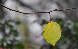 До України прийдуть дощі та холод. Прогноз погоди на тиждень