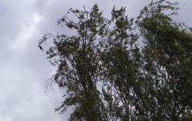 Шквальний вітер накрив Хмельницький