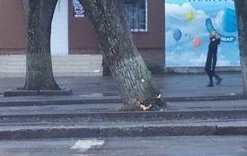 «Загроза життю»: у Хмельницькому штормовий вітер валить дерева (ФОТО)